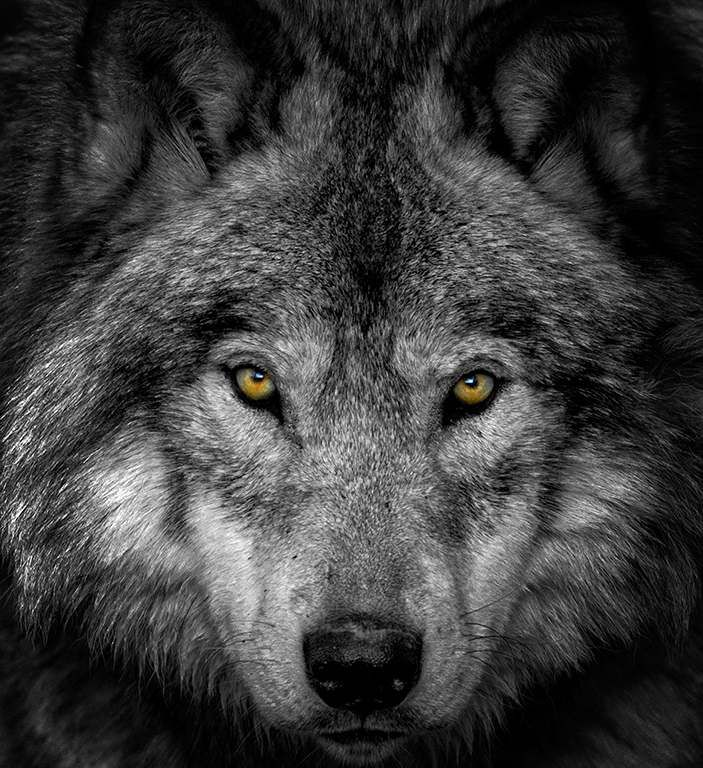 The Two Wolves – Aunty V